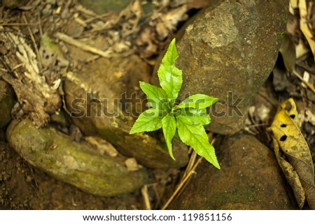 new grow, new growing green plant on rock earth