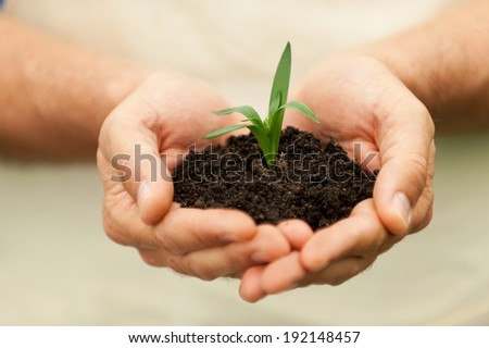 New Growth. Close-up of male hands holding green plant - Shutterstock ID 192148457