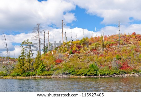 New Growth in Fall Colors on Sea Gull Lake in Minnesota