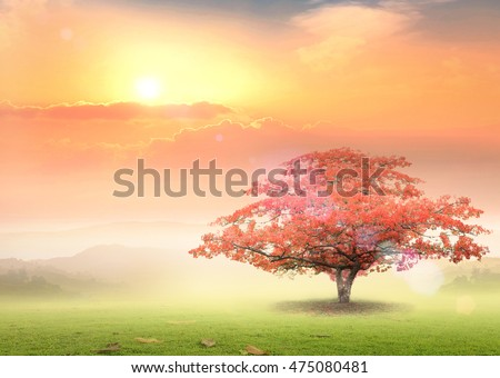 New Heaven and Earth concept: Alone tree on beautiful meadow autumn sunset background. Сток-фото ©