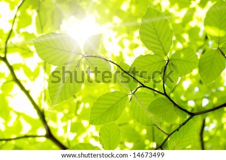 new leaf and sun ray