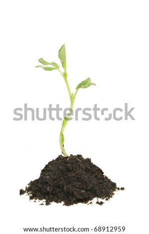 New life, a young plant seedling growing in a mound of earth