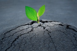 New life and path to the purpose concept with cracked asphalt road and green sprout growth through the let to the top.