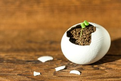 New life concept. Young sprout breaks through the egg shell.