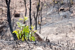 New life emerges after a forest fire in Colorado