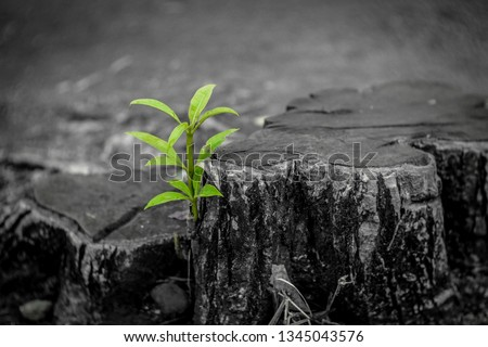New Life idea concept with seedling growing sprout (tree).business development and eco symbolic. - Image #1345043576