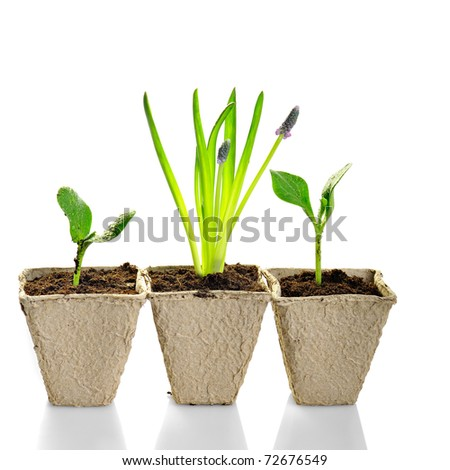 new life: little plant in pot isolated on white background