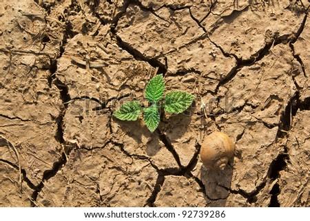 new life on the dry soil cracks