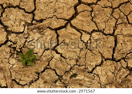 New life sprouting in dry cracked earth