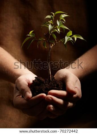 new plant - stock photo