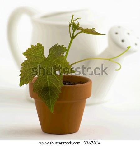New plant and watering-can on white background. Selective focus.