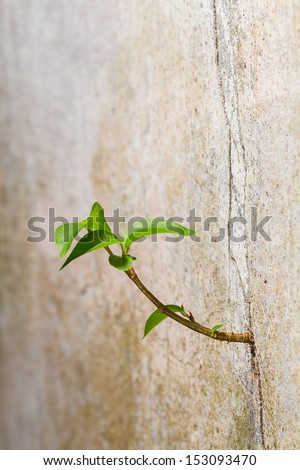 New plant germinates from the crack concrete wall, persistence of survival #153093470