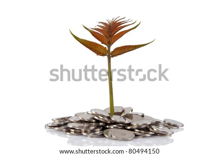 New plant growing from the coins. Money financial concep