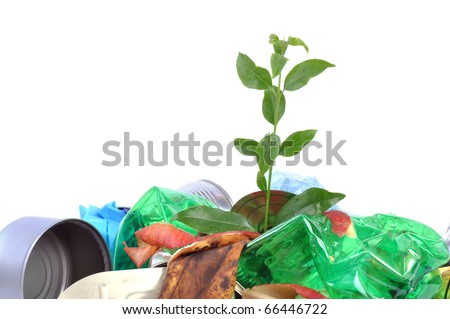 New plant growing from trash isolated on white background.