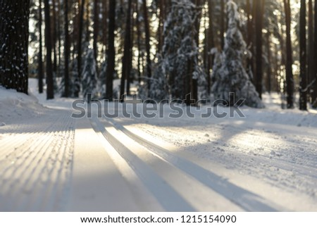 New ski track for classic skiing in the coniferous forest. Fresh ski track on a Sunny day in the forest.