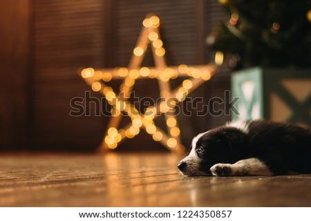New Year Dog #1224350857