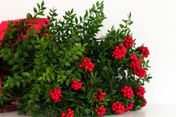 New year's bouquet, traditional red Kokina flower (Butcher's Broom)