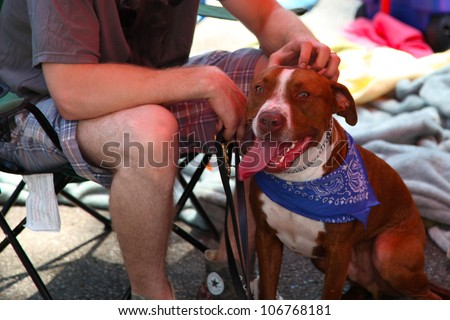 NEW YORK CITY - 1 JULY 2012: Adopt, a coalition of several animal rescue groups, hosts its first adoption fair in Tompkins Square Park. Friendly pit bull attends on 1 July 2012 in New York City.