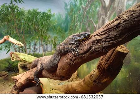New York City, United States - February 2, 2008 : Iguana #681532057