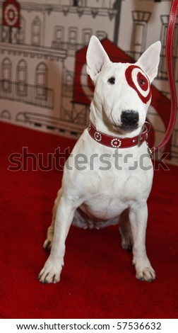 Get free stock photo of bullseye dog online download What kind of dog is the target mascot