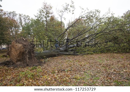 NEW YORK - OCT 30: Fallen tree  on the street in Queens borough after hurricane Sandy hit on October 30, 2012 in New York City, NY