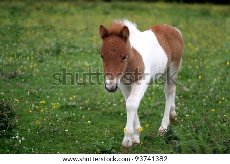 New young foal, only a couple of days old - stock photo