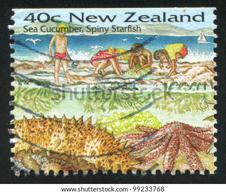 NEW ZEALAND - CIRCA 1996: stamp printed by New Zealand, shows Sea Cucumber, Spiny Starfish, circa 1996