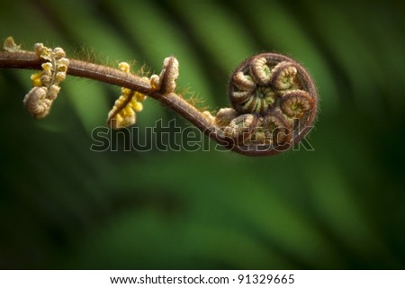 New Zealand fern (Maori symbol of renewal)