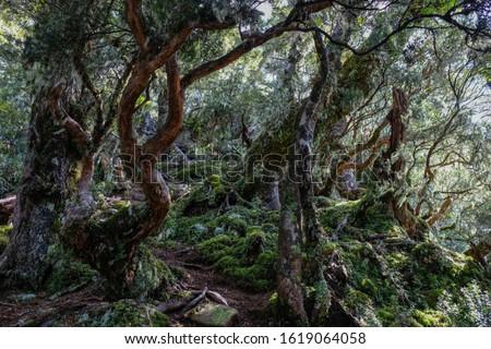 New Zealand, humpridge track, enchanted forest stock photo