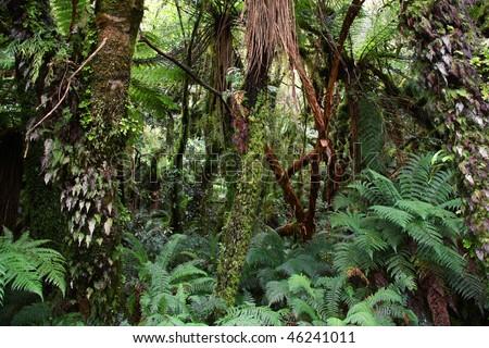 New Zealand Temperate Rainforest Food Web