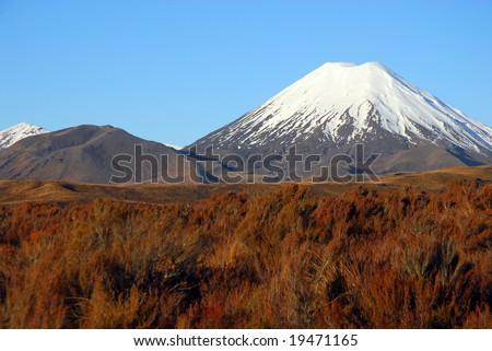 New Zealand's snowcapped Mount Tongariro volcano surrounded by vibrant native grasses