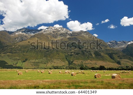 New Zealands countryside