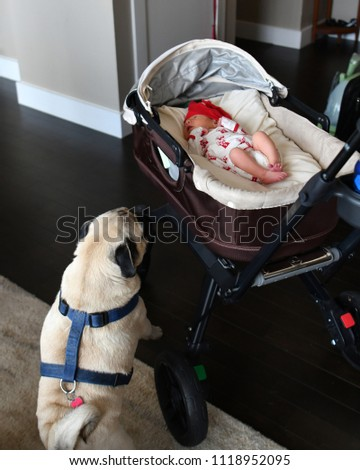 Stock Photo Newborn baby girl with a pug looking at her