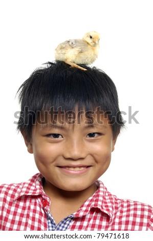 newborn chick standing on boy head, close up - stock photo