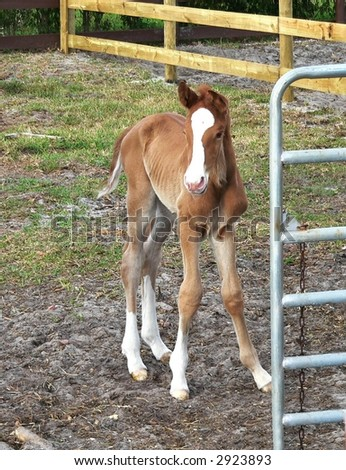Newborn horse standing - photo#21
