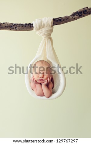 Newborn hanging by a branch
