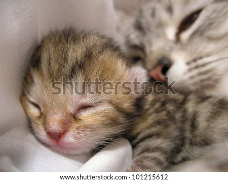 Newborn kitten and mother cat