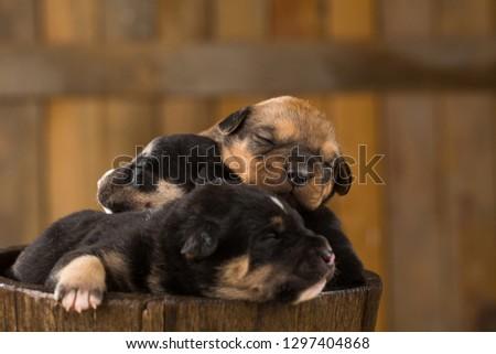 newborn puppies in a barn