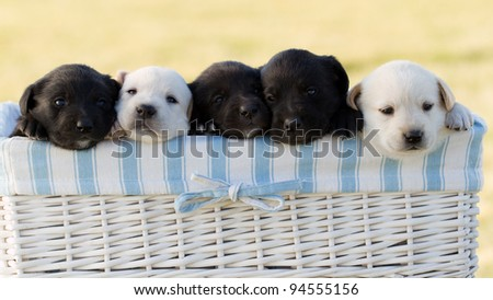 Newborn  puppies in basket