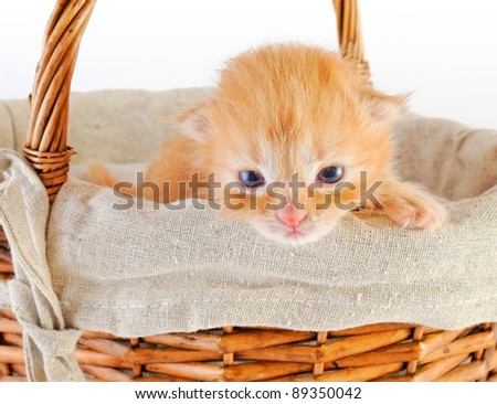 newborn red kitten in basket