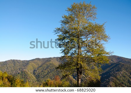 Newfound Gap Mountain Pass tree and mountains