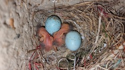 newly born baby bird hatch from the egg