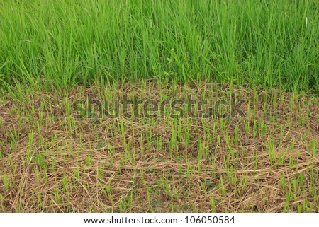 Newly cut grass and capacity to regenerate - stock photo