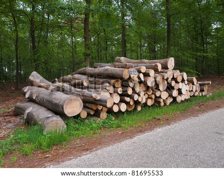 newly felled timber on the side of the road