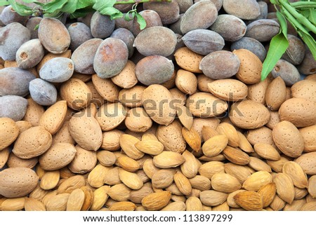newly harvested and bare almonds