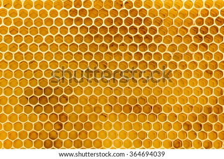 Newly pulled honey bee honeycomb beeswax on plastic foundation with pollen tracks.