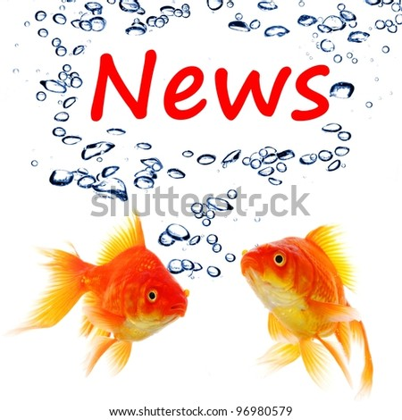 news or newsletter concept with word and goldfish on white background
