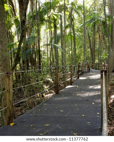 news south wales rainforest boardwalk