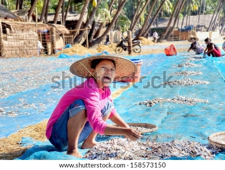 NGAPALI, MYANMAR - NOV.23;  Unidentified Woman at work at the beach to dry fresh fish in the sun on Nov.23, 2012 Myanmar.Selling fish is the main income for the people of Ngapali