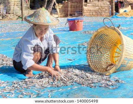 NGAPALI, MYANMAR - NOV.23; Women at work at the beach to dry fresh fish in the sun on Nov.23, 2012 Myanmar.Selling fish is the main income for the people of Ngapali